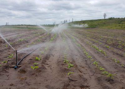 KZN plants